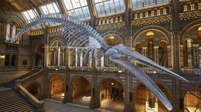 Fantastic Museums To Visit In London