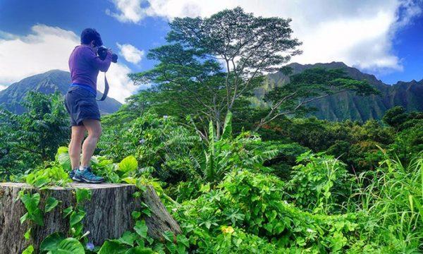 Blue Hawaii Tours Island Tour